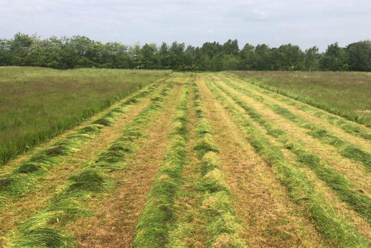 Boeren Beef is aangesloten bij Natuurbeheer Nederland | Biologische boerderij Boeren Beef
